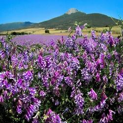 Пазл онлайн: Цветы и цвета Наварры
