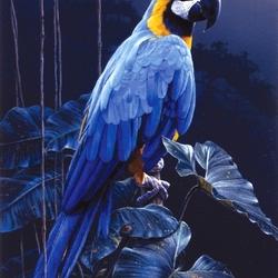 Пазл онлайн: Голубой попугай