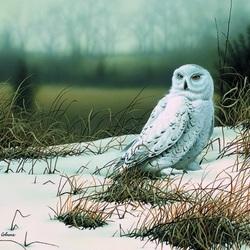 Пазл онлайн: Белая сова