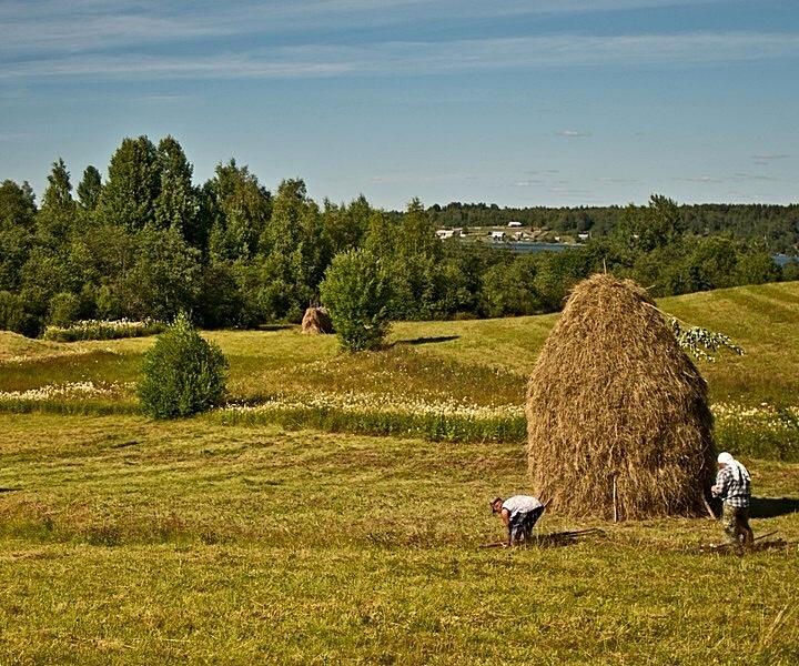 одна картинки покос в деревне брусового дома напрямую