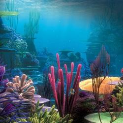 Пазл онлайн: Кораллы