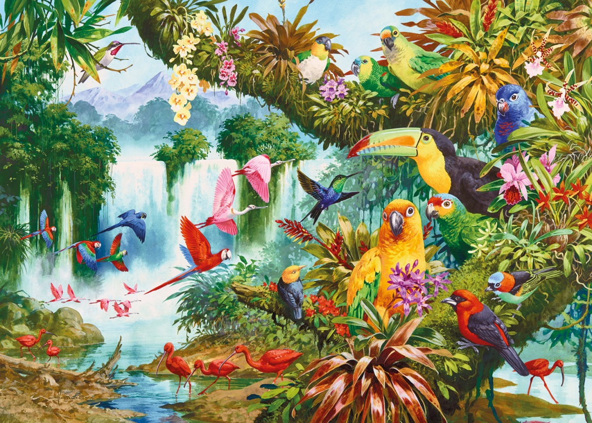 вебкам-студия, картинки с райскими птичками втором часу