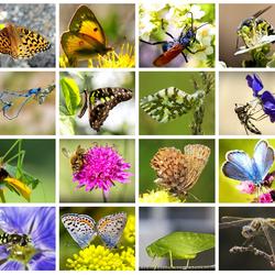 Пазл онлайн: Жизнь насекомых